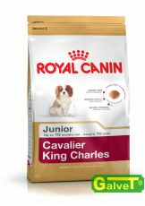 Cavalier King Charles Junior 6x1,5kg